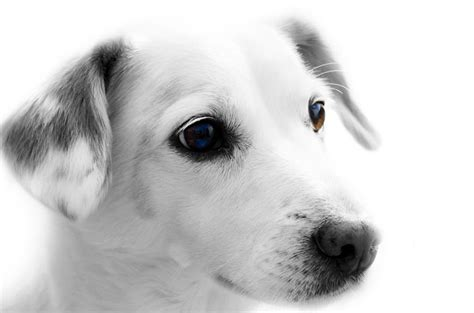 Dog Free Stock Photo - Public Domain Pictures