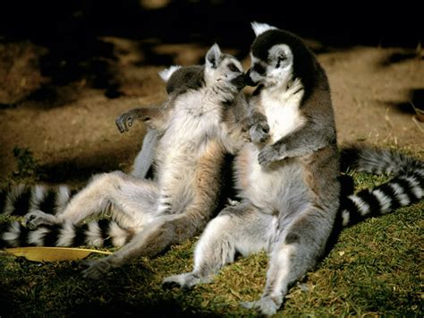 20 Animal Photos That Will Make You Smile - AmO Images